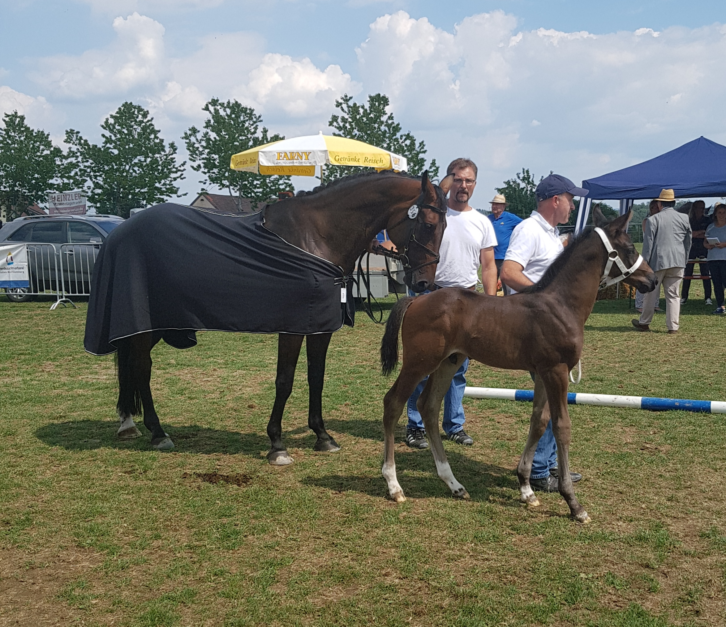 Hickstead-White x Chacco Blue